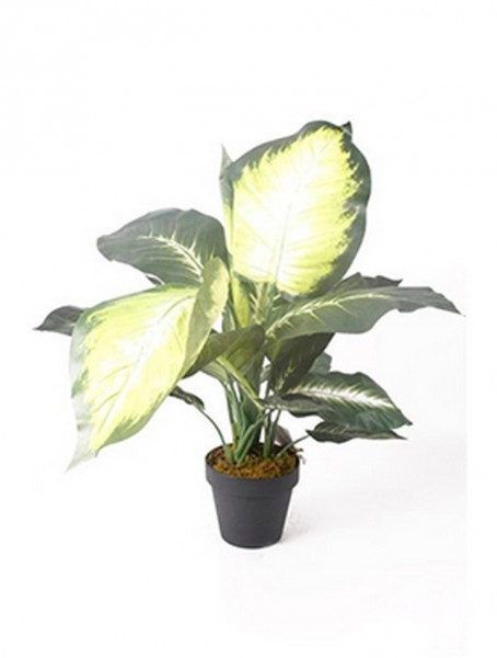Dieffenbachia grün 50 cm | Kunstpflanze im Topf