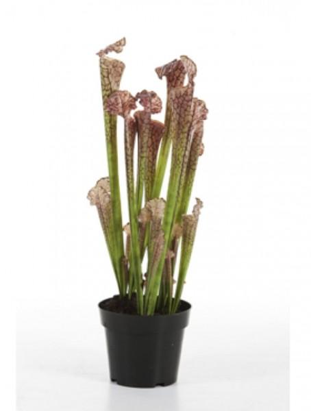 Sarracenia 65 cm | künstliche Trompetenpflanze