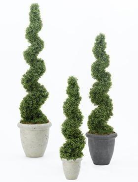 Boxwood Spiral l Buchsbaum Spirale