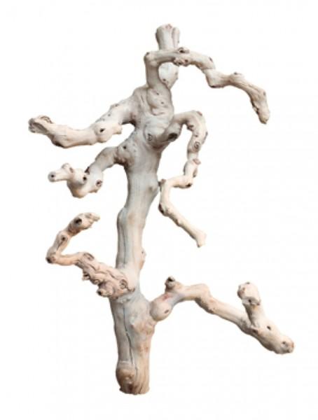 Traubenholz sandgestrahlt verzweigt - Grapewood blanchy