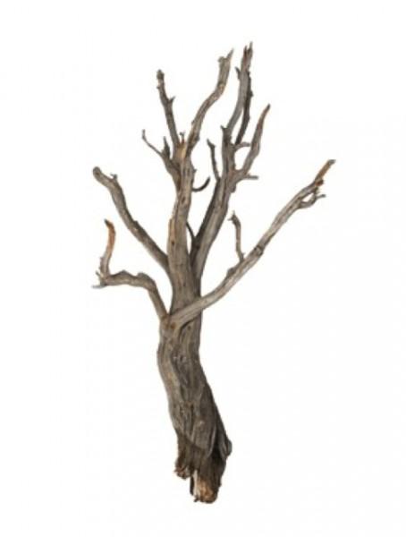 Ghostwood raw - Treibholz