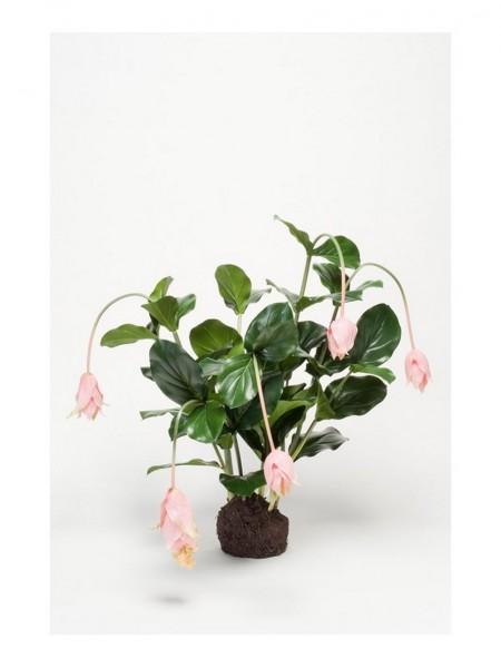 Medinilla pink soiled - Kunstpfanze