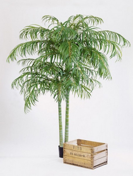 Areca Plame de luxe | Kunstpflanze