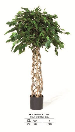 Ficus Exotica Kugel 150 cm - Kunstpflanze