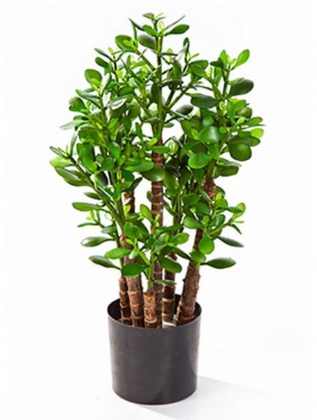 Crassula ovata Kunstpflanze 60 cm