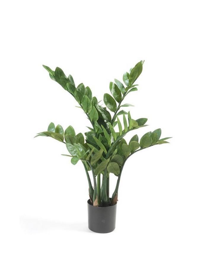 Zamioculcas - Glücksfeder Kunstpflanze