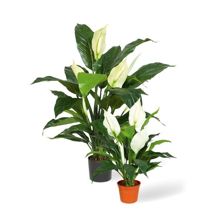 Spathiphyllum Deluxe Kunstpflanze