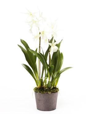 Oncidium Weiß 75 cm - Orchideen Kunstpflanze
