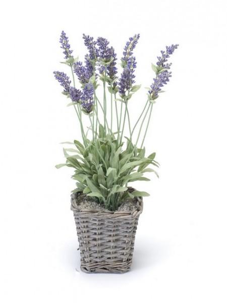 Lavendelbusch im Körbchen