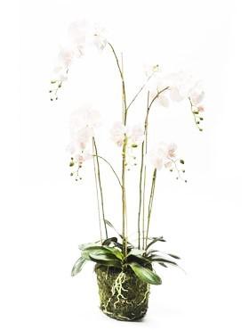 Phalaenopsis moss rosa - Orchideen Kunstpflanze