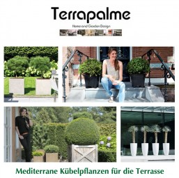mediterrane k belpflanzen f r die terrasse terrapalme heim und gartenshop. Black Bedroom Furniture Sets. Home Design Ideas