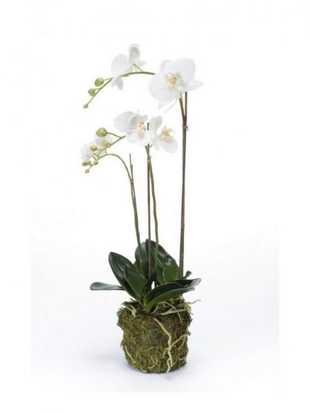 Phalaenopsis - Orchideen Kunstblume im Moosballen