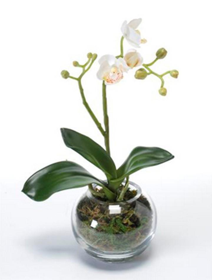 phalaenopsis mit moos orchideen kunstpflanze im glas terrapalme heim und gartenshop. Black Bedroom Furniture Sets. Home Design Ideas