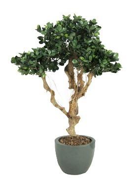 Ficus panda Bonsai | Kunstpflanze