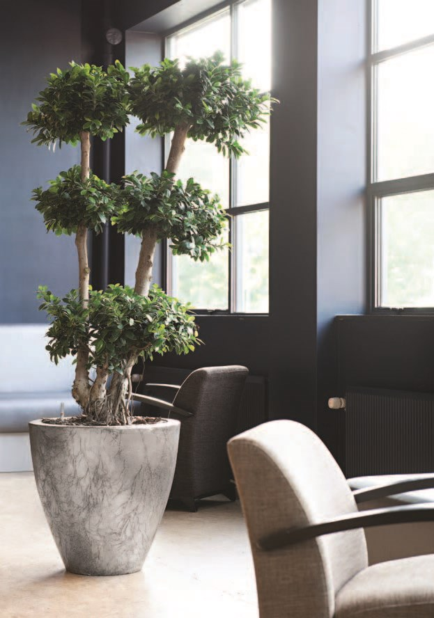 Jago-cavaleiro-planter-fiberglas-pflanzgefaess-stimmungsbild