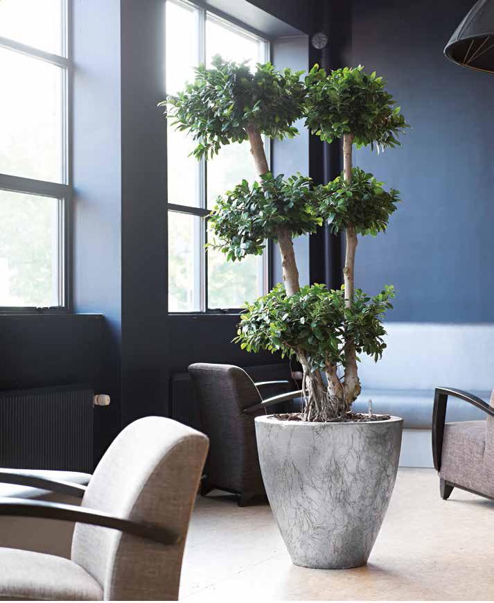 cavaleiro-planter-fiberglas-pflanzkubel-stimmungsbild