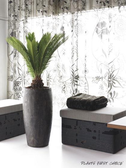 croco-design-pflanzvase-beispiel