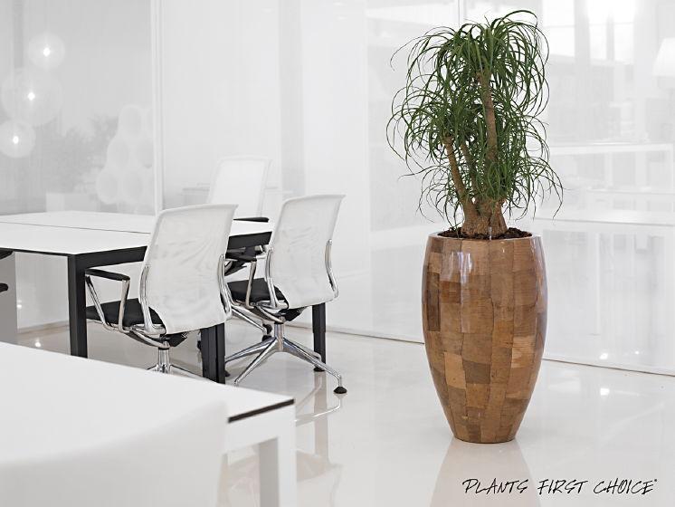 leaf-bananenbaum-pflanzvase