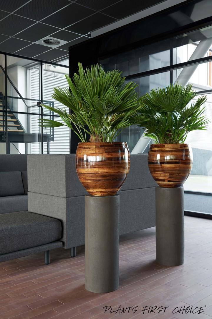 plantano-fiberglas-pflanzkubel-stimmungsbild