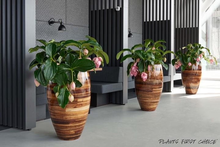 http://www.terrapalme.de/media/image/Jago/plantano-fiberglas-pflanzvase-stimmungsbild
