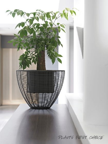 Wire Planter Weaving anthracite