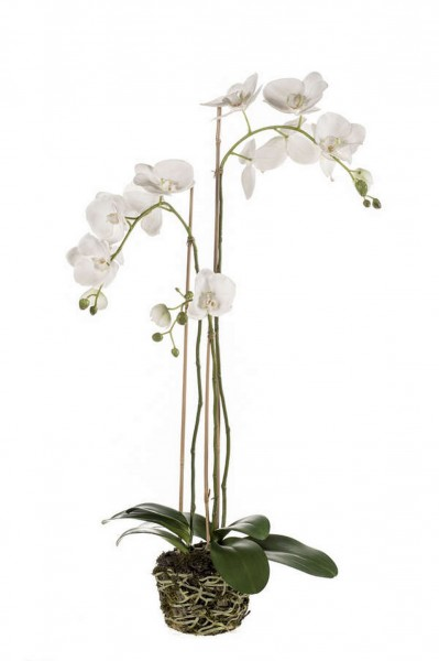 Phalaenopsis Kunstpflanze soiled w. roots 80cm