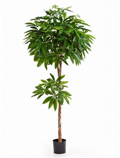 Pachira 180 cm - Glückskastanie Kunstpflanze