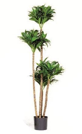 Dracaena Fragrans - Kunstpflanze