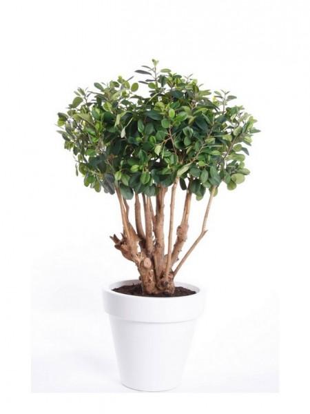 Ficus Panda Tree - Feigen Kunstbaum im Topf
