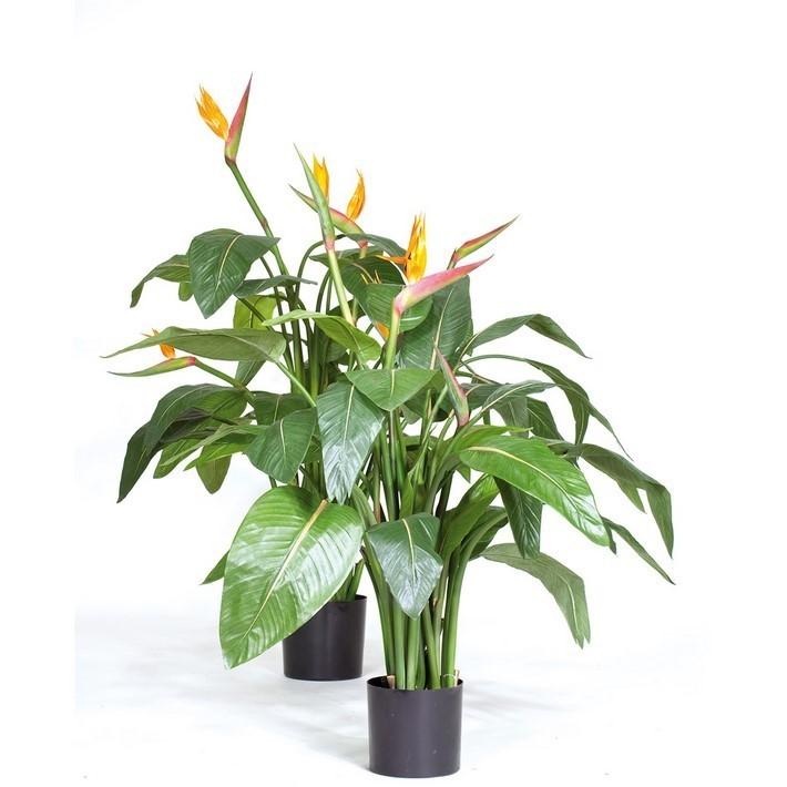 Strelizie - Strelitzia | Kunstpflanze
