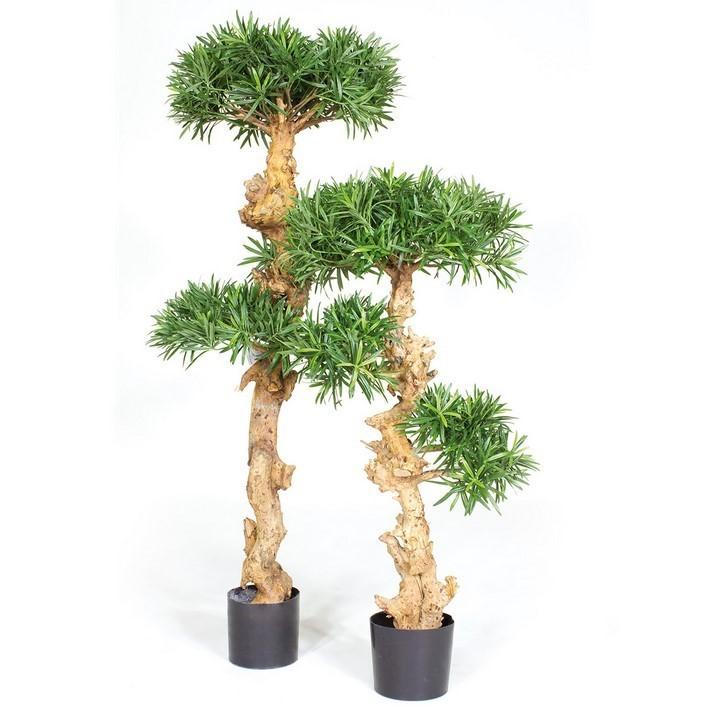 Podocarpus Bonsai - Kunstbaum