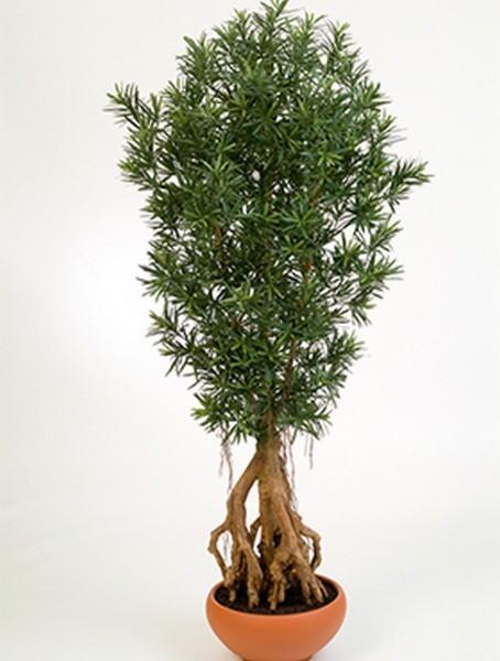 Podocarpus 180 cm - Kunstbaum