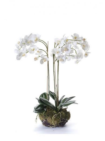 Phalaenopsis weiß - Orchideen Kunstblume 80 cm