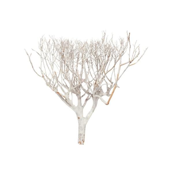 Coral Busch weiß | Dekoholz