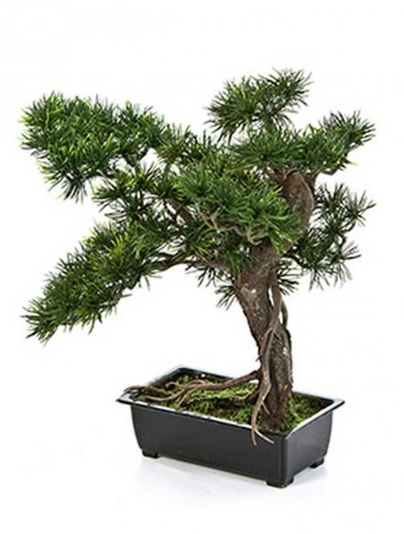 Pinus Bonsai Kunstbäumchen