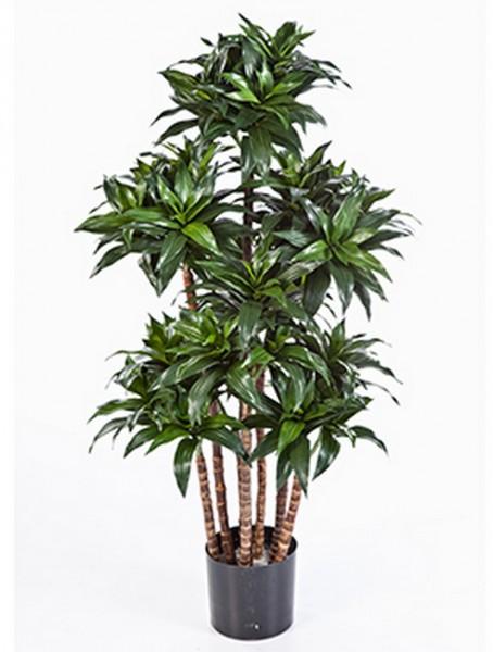 Dracaena fragrans compacta 120 cm - Kunstbaum
