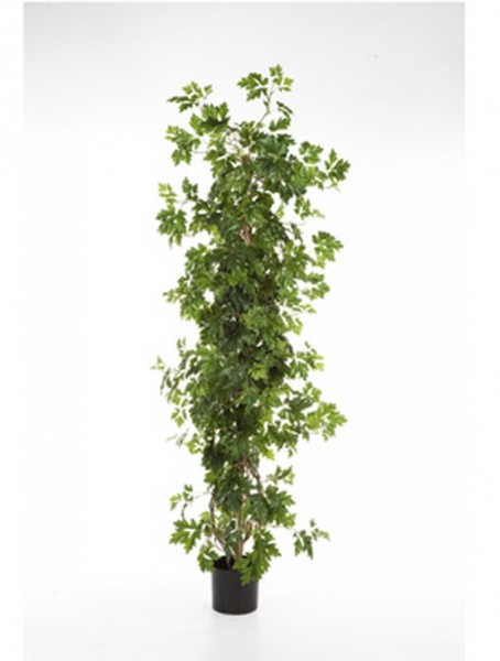 Cissus Säule - Kunstbusch