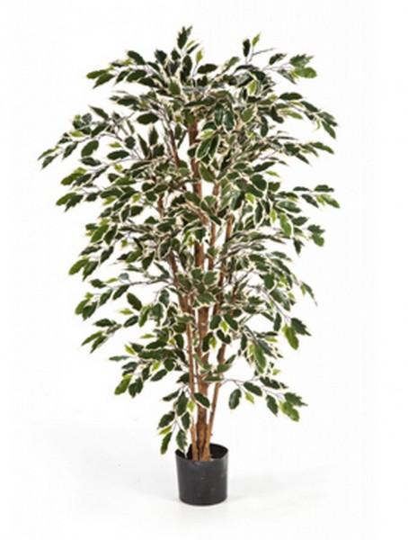 Ficus nitida var   Lorbeerfeige Kunstbaum