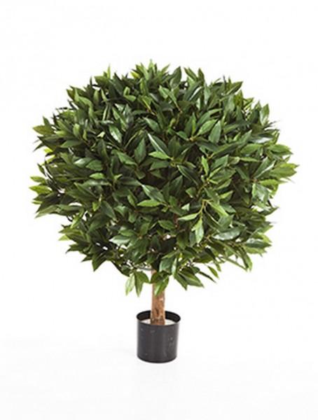 Laurus nobilis - Kunstbaum