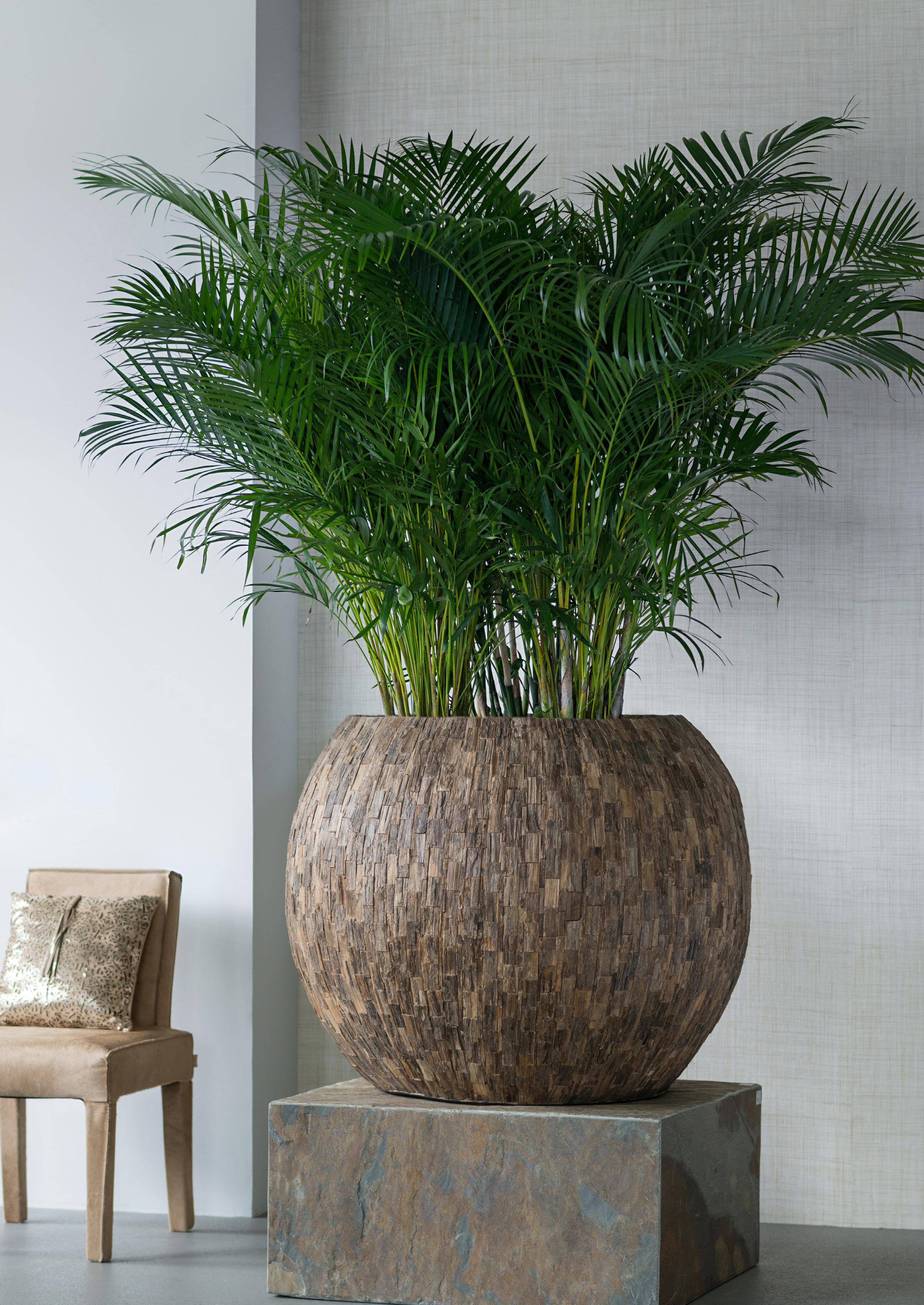 emana-cemani-wood-bowl-pflanzschale-stimmungsbild