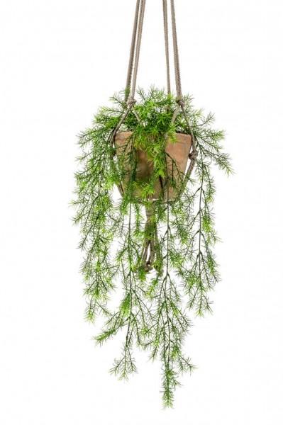 Asparagus sprengeri Ampel 75 cm im hängenden Topf