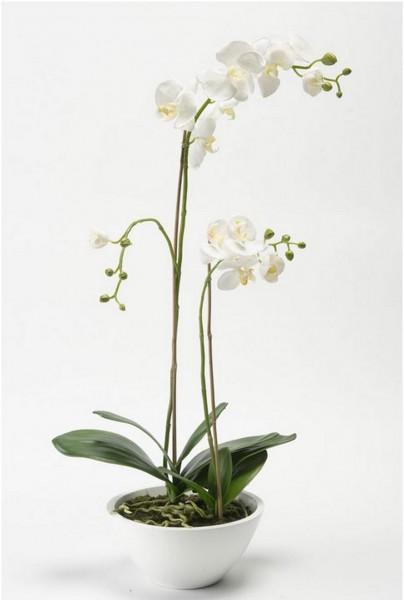 Phalaenopsis in weißer Schale - weiße Orchideen Kunstpflanze