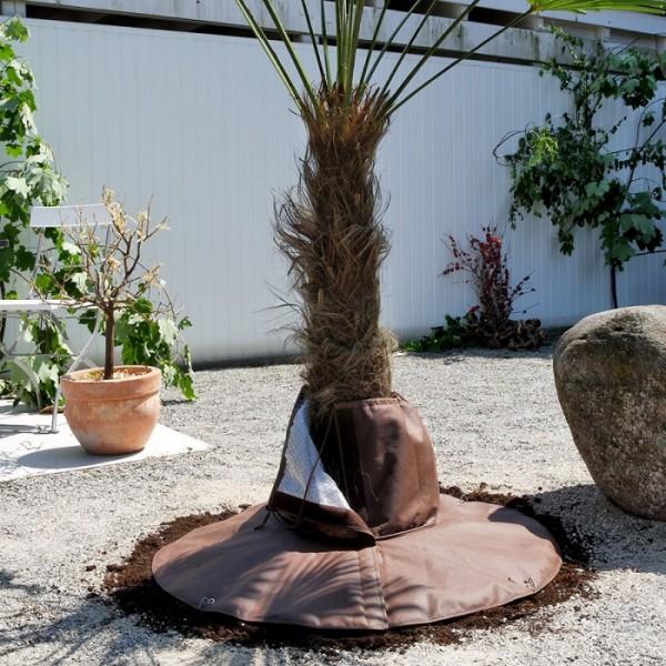 Frostschutz für Wurzeln - Palmen Winterschutz