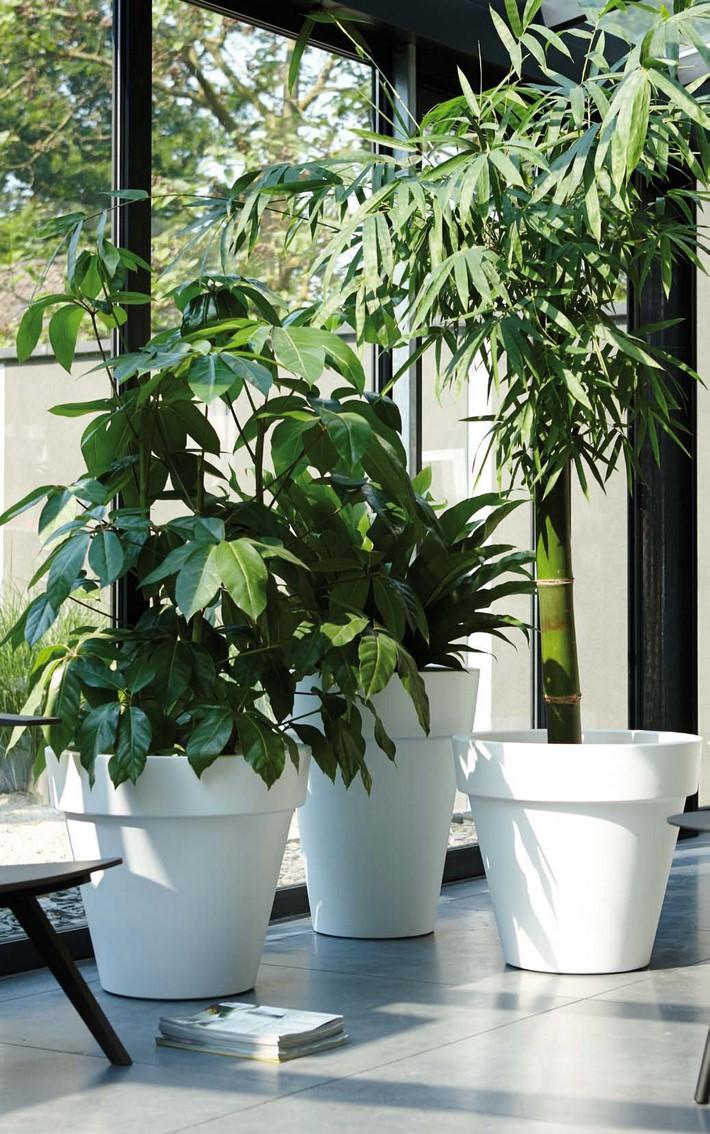 bambusa-vulgaris-green-stimmungsbild-pure-round