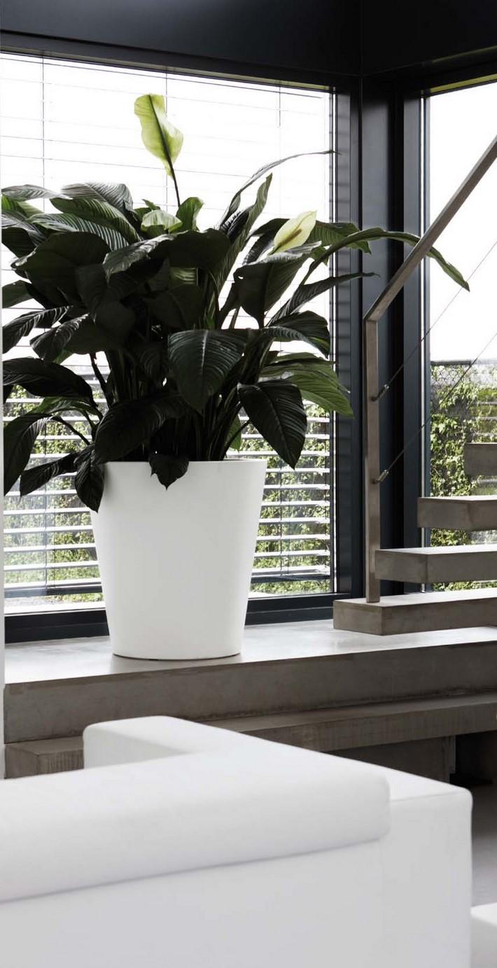 spathiphyllum-einblatt-stimmungsbild-pure-straight-round