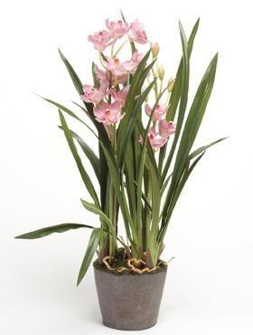 Cymbidium Rosa 75 cm - Orchideen Kunspflanze