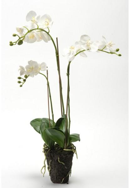 Phalaenopsis - Orchideen Kunstblume 75 cm