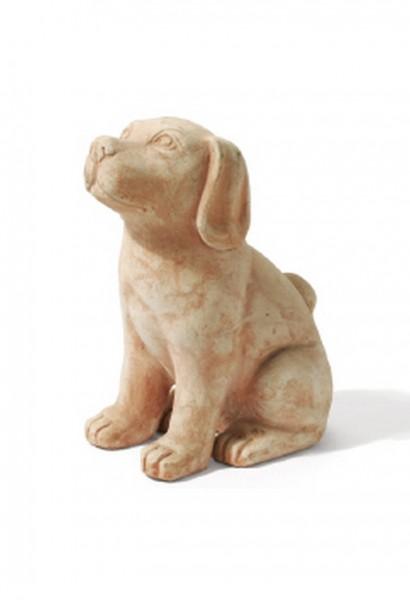 Hund Casimo - Rossini Terracotta