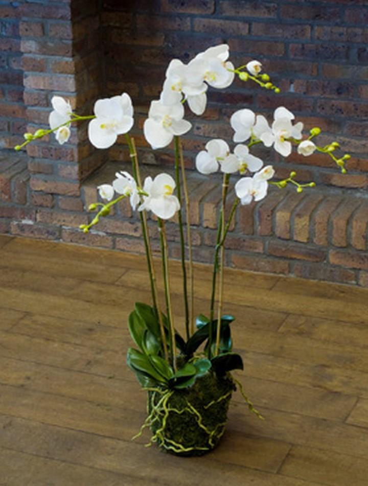 Phalaenopsis moss white   Orchideen Kunstpflanze