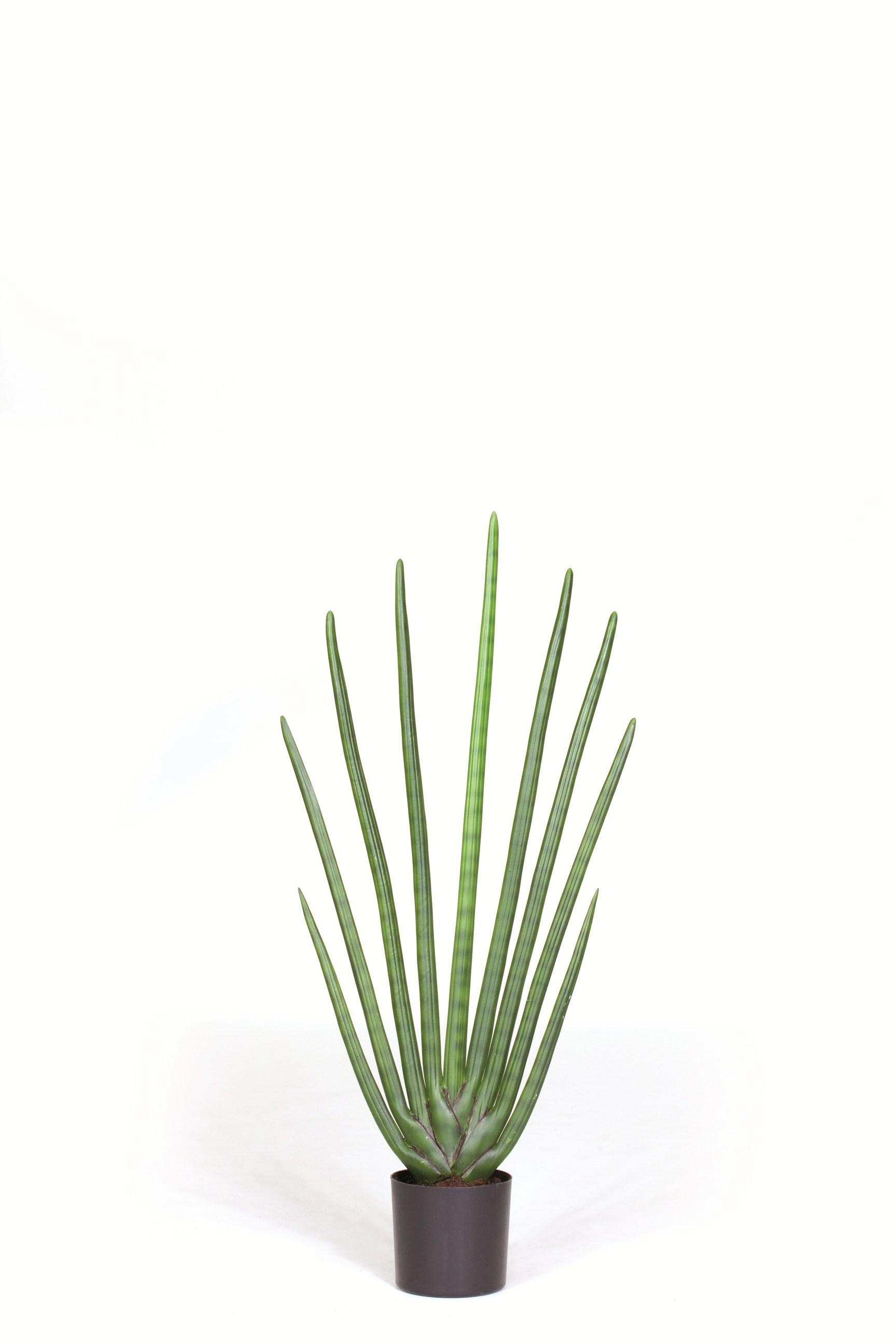 sansevieria cylindrica 80 cm bogenhanf kunstpflanze terrapalme heim und gartenshop. Black Bedroom Furniture Sets. Home Design Ideas